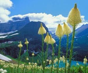 Układanka Ładny krajobraz z kwiatami na pierwszym planie