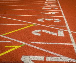 Układanka Śledzić lekkoatletyka 100 m