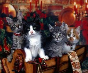 Układanka Śliczne kocięta na Boże Narodzenie