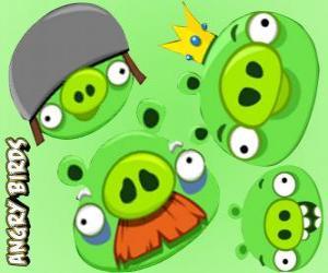 Układanka Świń z Angry Birds