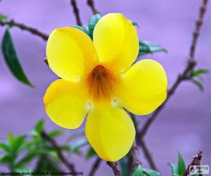 Układanka Żółty kwiat z pięciu płatków