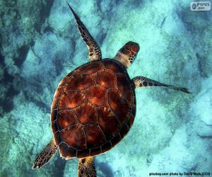 Układanka Żółw wodny w kolorze nieba