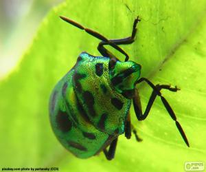 Układanka Żuk zielony