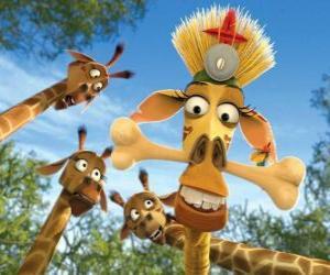 Układanka Żyrafa Melman, ukrytych pod ciekawskich oczu innych żyrafy
