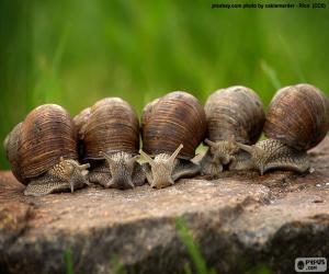 Układanka 5 ślimaków