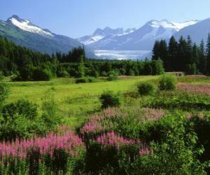 Układanka Alaska w letni krajobraz