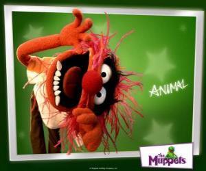 Układanka Animal, szalony perkusista zespołu z Muppet Show to człowiek prymitywny
