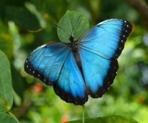 Układanka Błękitny motyl