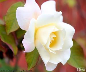 Układanka Biała Róża