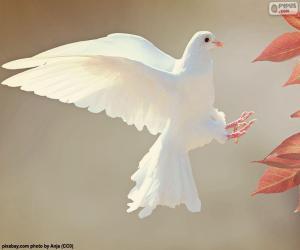Układanka Biały gołąb