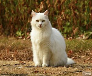 Układanka Biały kot siedzi