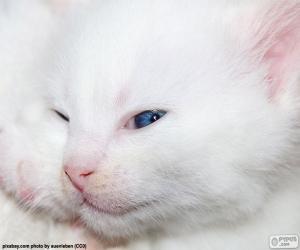 Układanka Biały kot twarzy