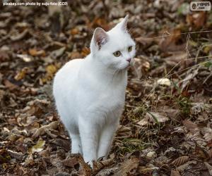 Układanka Biały kotek