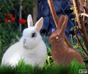 Układanka Biały królik i inne czekolady