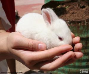 Układanka Biały królik, ręce