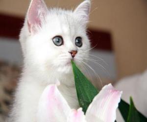 Układanka Biały kot