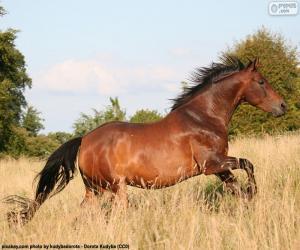 Układanka Bieg brązowy koń