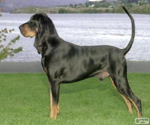 Układanka Black And Tan Coonhound