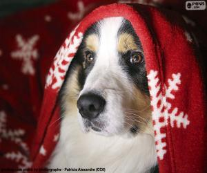 Układanka Boże Narodzenie pies