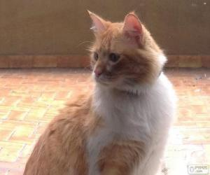 Układanka Brązowy i biały kot