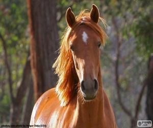 Układanka Brązowy koń z przodu