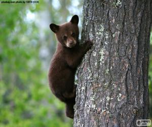 Układanka Brown bear cub wspina drzewo