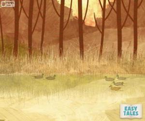 Układanka Brzydkie kaczątko, pływanie w stawie z braćmi
