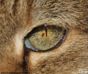 Układanka Cat's eye