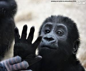 Układanka Ciekawskich małp