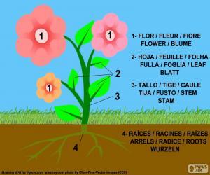 Układanka Części roślin