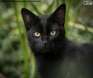 Układanka Czarna twarz kota