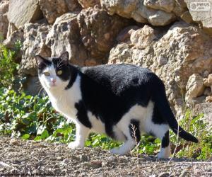 Układanka Czarno-biały kot