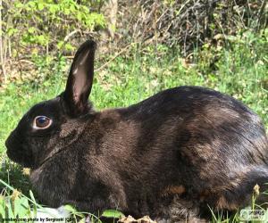 Układanka Czarny królik