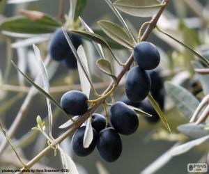 Układanka Czarny olive branch
