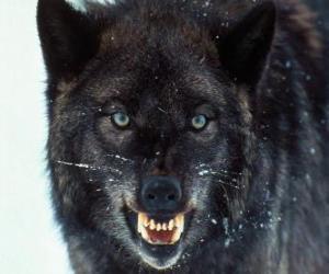 Układanka Czarny Wilk