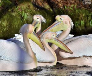 Układanka Cztery różowe pelikany