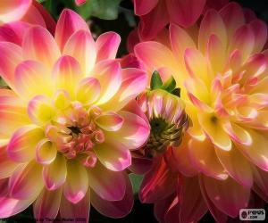 Układanka Dalia różowy i żółty