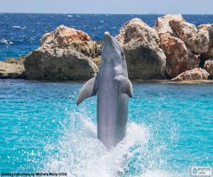 Układanka Delfin robi trick
