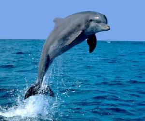 Układanka Delfin
