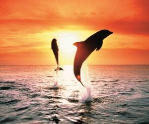 Układanka Delfiny na zachód słońca