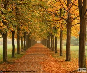 Układanka Droga wśród drzew jesienią