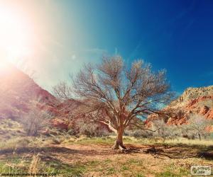 Układanka Drzewa bez liści