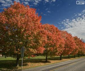Układanka Drzewa jesienią