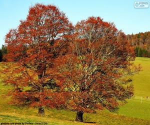 Układanka Drzewa liściaste