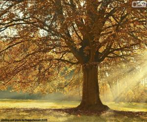 Układanka Drzewo liściaste jesienią