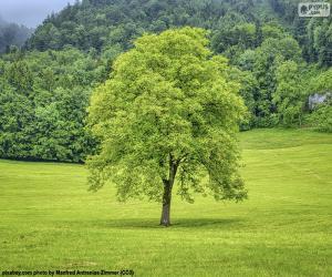 Układanka Drzewo na łące
