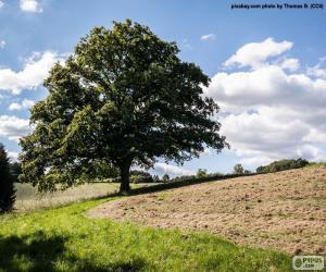 Układanka Drzewo w zaorane pole