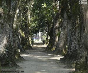 Układanka Duże drzewa, Brazylia
