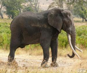Układanka Duży słoń