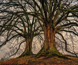 Układanka Dwóch starych drzew